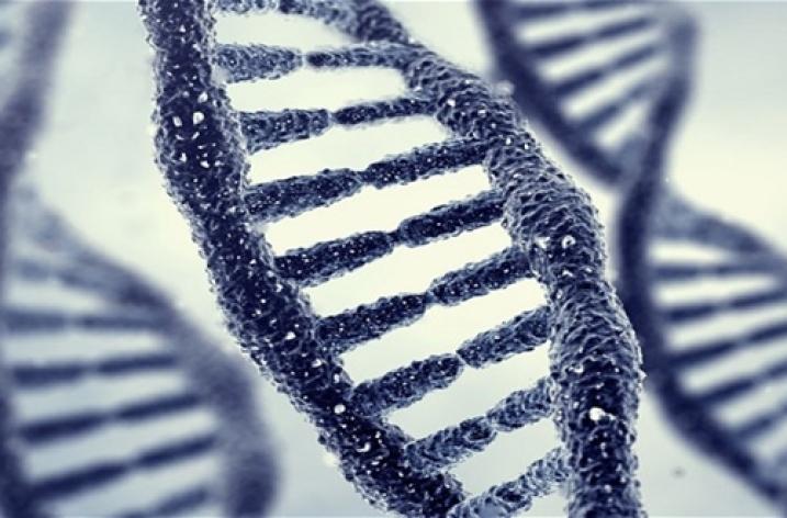 Teoria genetică- o explicație a comportamentului criminal?